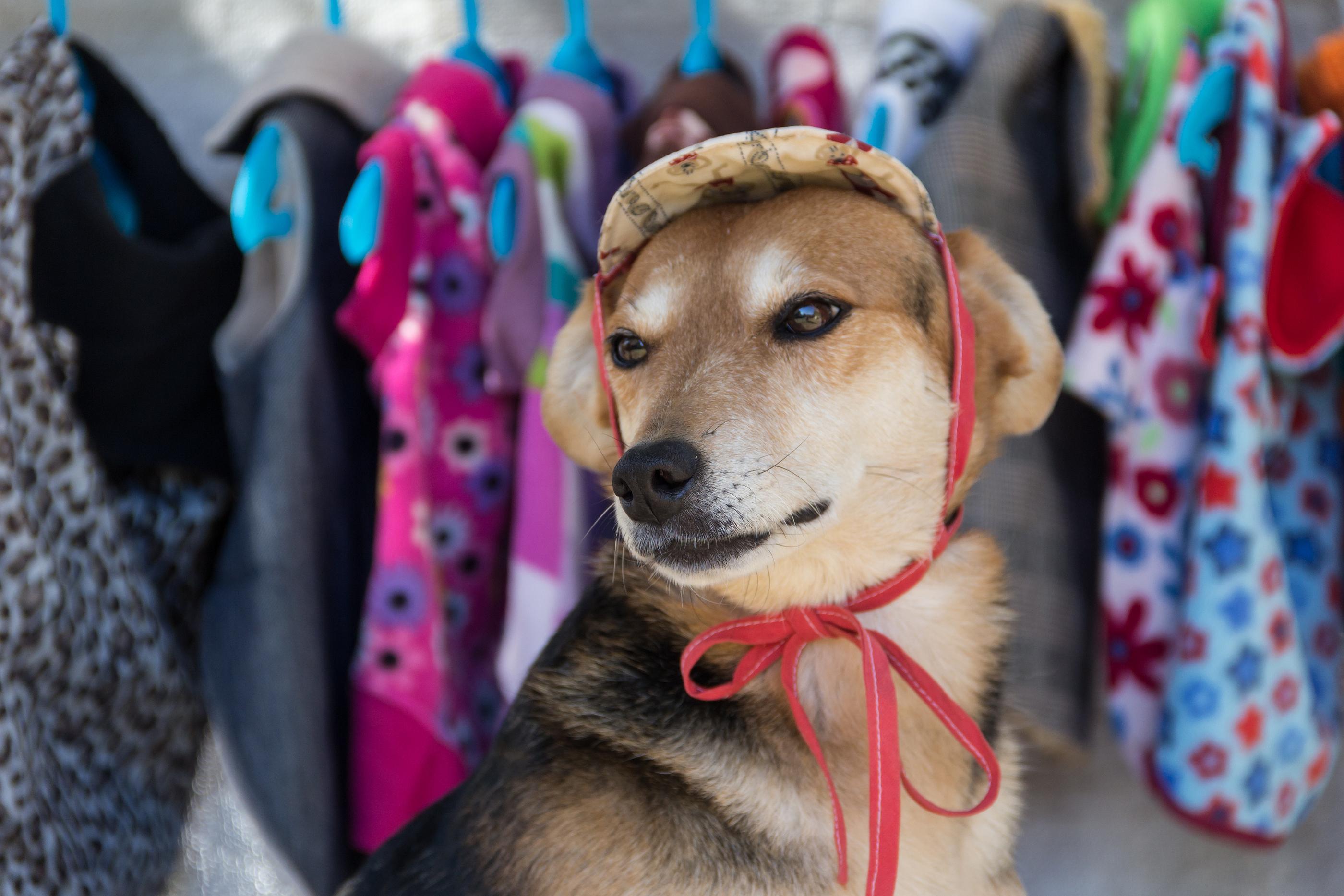 Pet stores, pet supply stores, pet companies